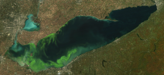 Lake Erie algae bloom 2011 photo